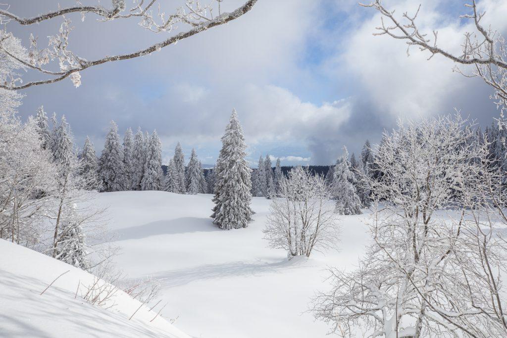 Pâturages et végétation des crêtes du Jura recouverts de neige au cours d'une activité de randonnée en raquettes.